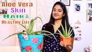 Aloe vera benefits for skin   care routines 2019