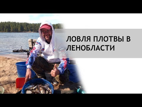 Лолвля плотвы в Ленинградской области