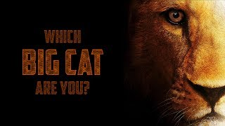 Which BIG CAT Are You?