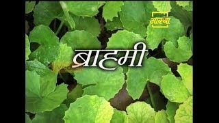 Health Benefits of Brahmi Plant | Acharya Balkrishna