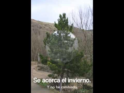 LOS ARBOLES PERENNES SORIA