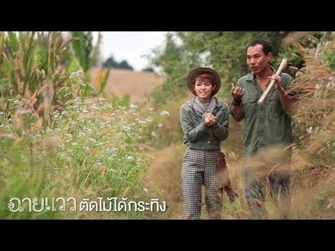 ฉายแวว [by Mahidol] ซีรีย์ งานวิจัยนักศึกษา : ตัดไม้ได้กระทิง