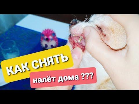 Зубной камень у собак удаление в домашних условиях
