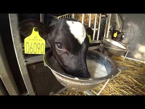 Intelligent Technology Calf Transportation Modern Farm Cow Automatic Hay Milk Feeding Smart Cowshed