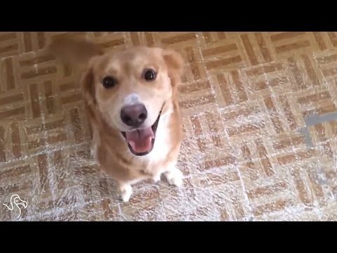 Dogs Greeting Their Humans
