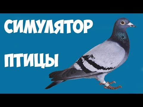 Симулятор Птицы!