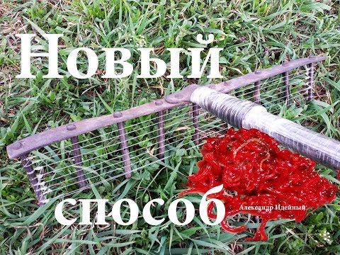 Где и как намыть мотыля весной под Киевом