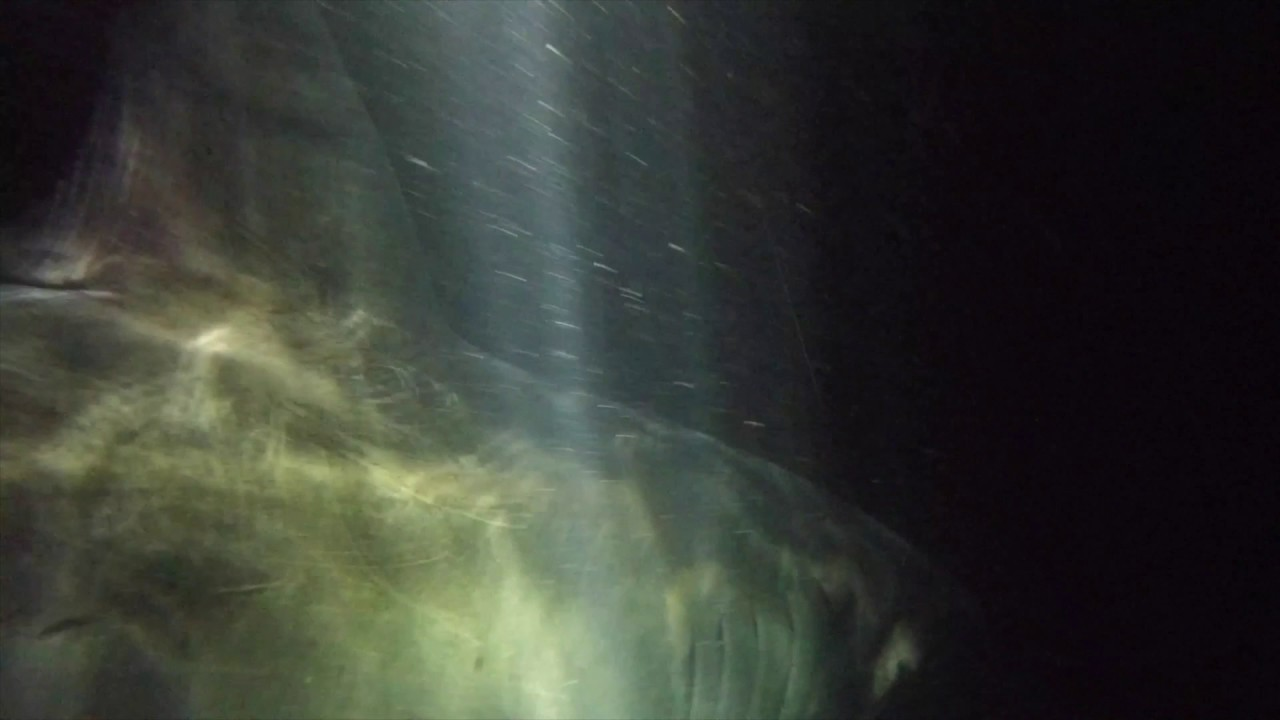 Great white shark in the dark off hilton head sc for Outcast sport fishing