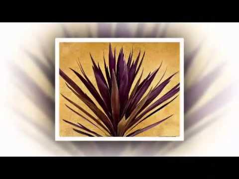 Identyfication of Ornamental Plants