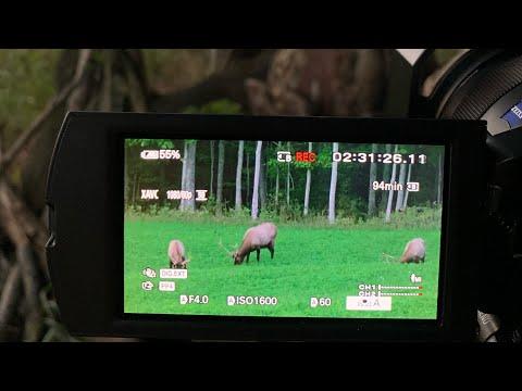 Early Elk Season, Customizing Pistol; Michigan Out Of Doors TV #2038