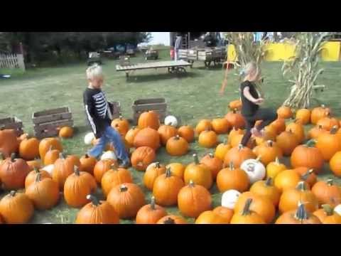 Download Fall Harvest Orchard