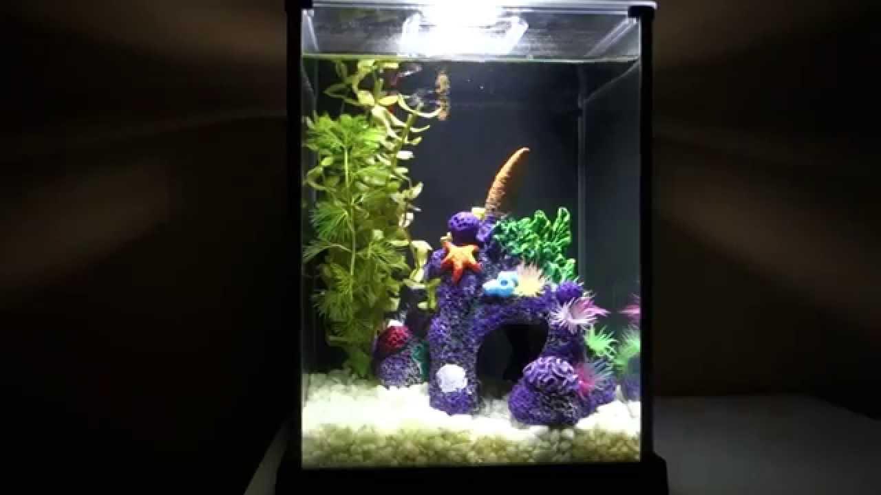 2 guppys dans un aquarium fluval spec de 2 6 gallons 10. Black Bedroom Furniture Sets. Home Design Ideas