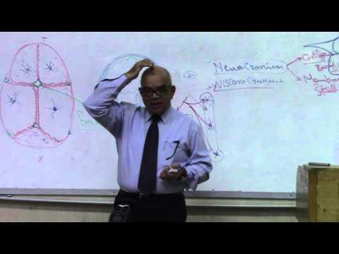 09 Development of Skull + vertebral column P1 Dr.Gamal