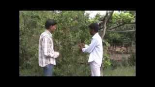 Success story of pomegranate Hindi Access Madhyapradesh