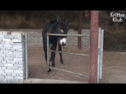 Donkey's Ready To Risk It All For His Crush | Kritter Klub