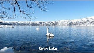 Swan Lake = Tchaikovsky / Herbert von Karajan.