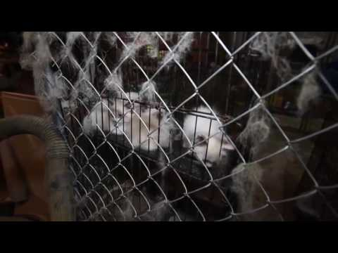 Massive animal rescue in North Carolina