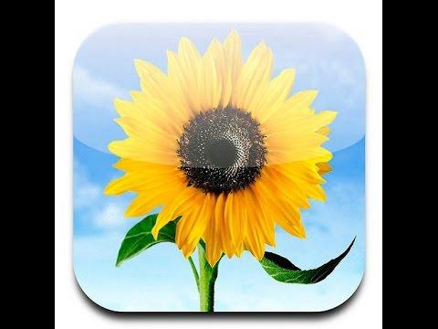 как восстановить фотографии с iPhone 6 Plus/6/5S/5C/5/4S/4/3GS