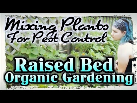 Organic Gardening – Mixing Plants For Pest Control