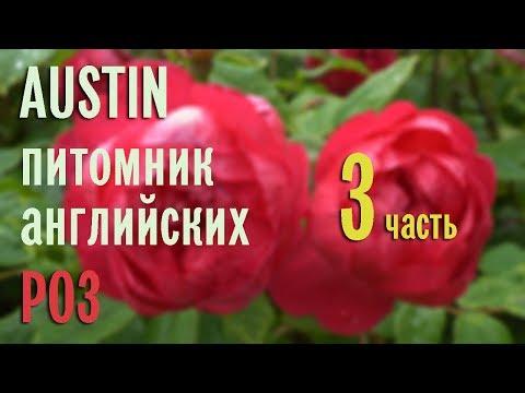 Розарии в английском питомнике AUSTIN. Эпизод 3