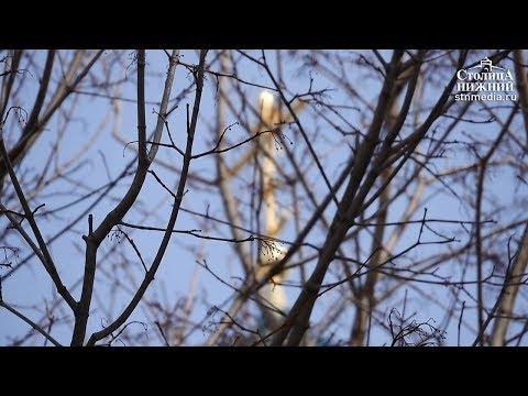 Погода в Нижнем Новгороде: когда придет весна?