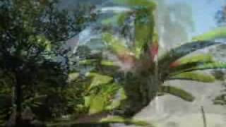 Serrinha do Alambari Guia RJ Fauna e Flora