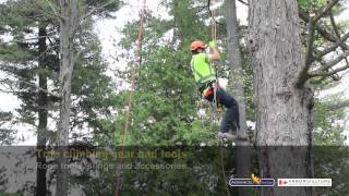 Advanced Tree Care - Tree Climbing, Fall Protection & Work Positioning