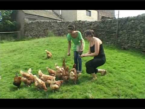 Ice Cream Farm Cheshire  Hollyoaks star takes to the farm  Collecting eggs