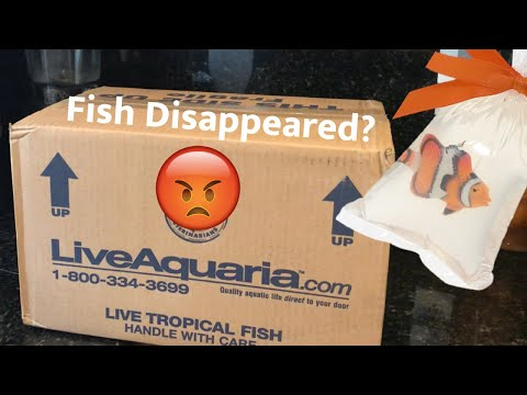 LiveAquaria Unboxing... Fish Did Not Make It
