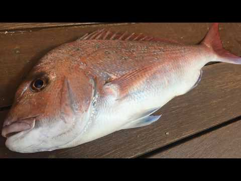 Snapper Caught Off St Kilda Breakwall - Snapper Fishing - The Bait Is A Bit Odd  -