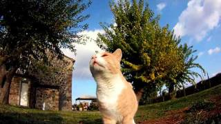 Casale dei Gelsi (gatto) Agriturismo B&B in Umbria - Orvieto.mp4