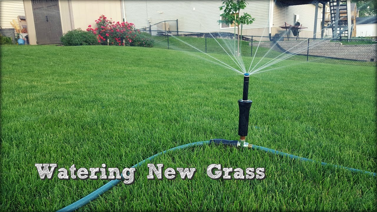 How To Water New Gr Seed Above Ground Sprinkler Fall Lawn Renovation And Overseeding Step 5