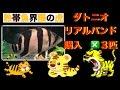 [熱帯魚界の虎]ことダトニオ 購入 IN ラフレシアさん [アクアリウム][新魚購入]