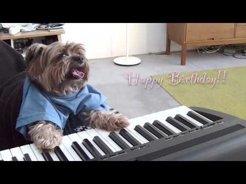 Play That Birthday, Keyboard Dog