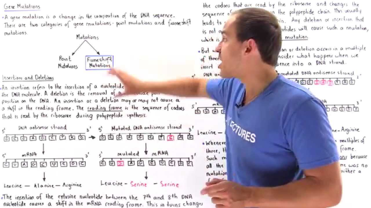 Insertion, Deletions and Frameshift Mutations - YouTube