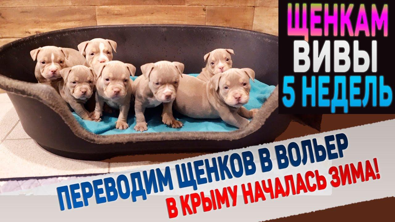 Переводим щенков Вивы в вольер. Одного щенка оставляем дома. В Крыму началась зима!