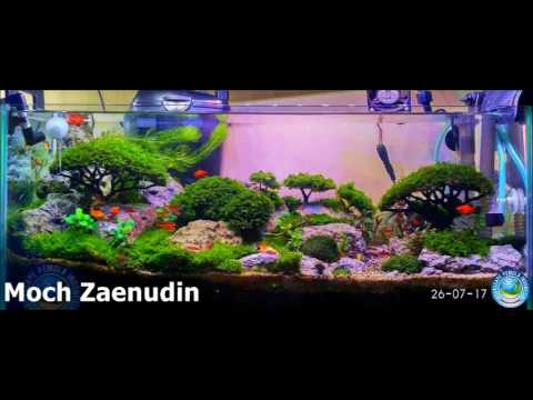 Aquascape Pemula Indonesia Youtube
