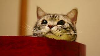 リスっぽい?おとんをじっと見つめる表情が可愛い猫
