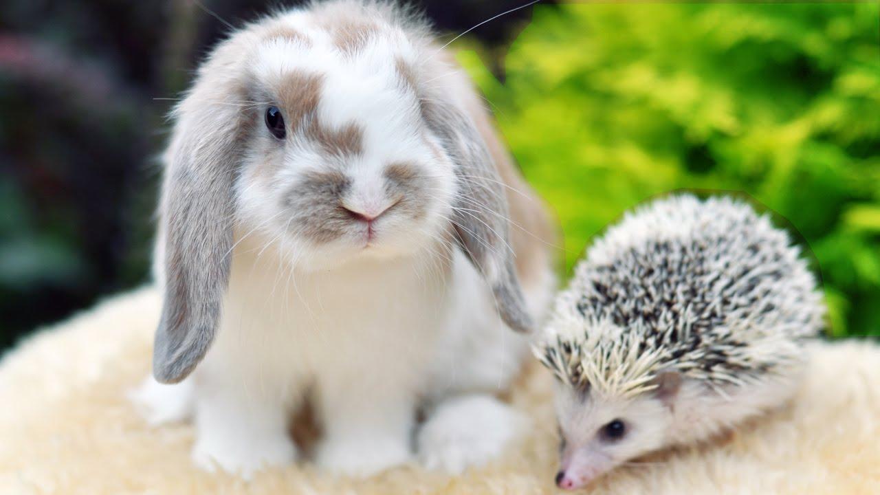 Карликовые кролики рекс. Выбирайте! Оранжевые детки кролика .