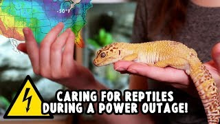 Caring For Reptiles During A Power Outage!!