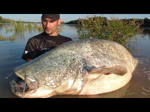 AWESOME CATFISH OVER 250 POUNDS IN SPINNING by CATFISHING ...