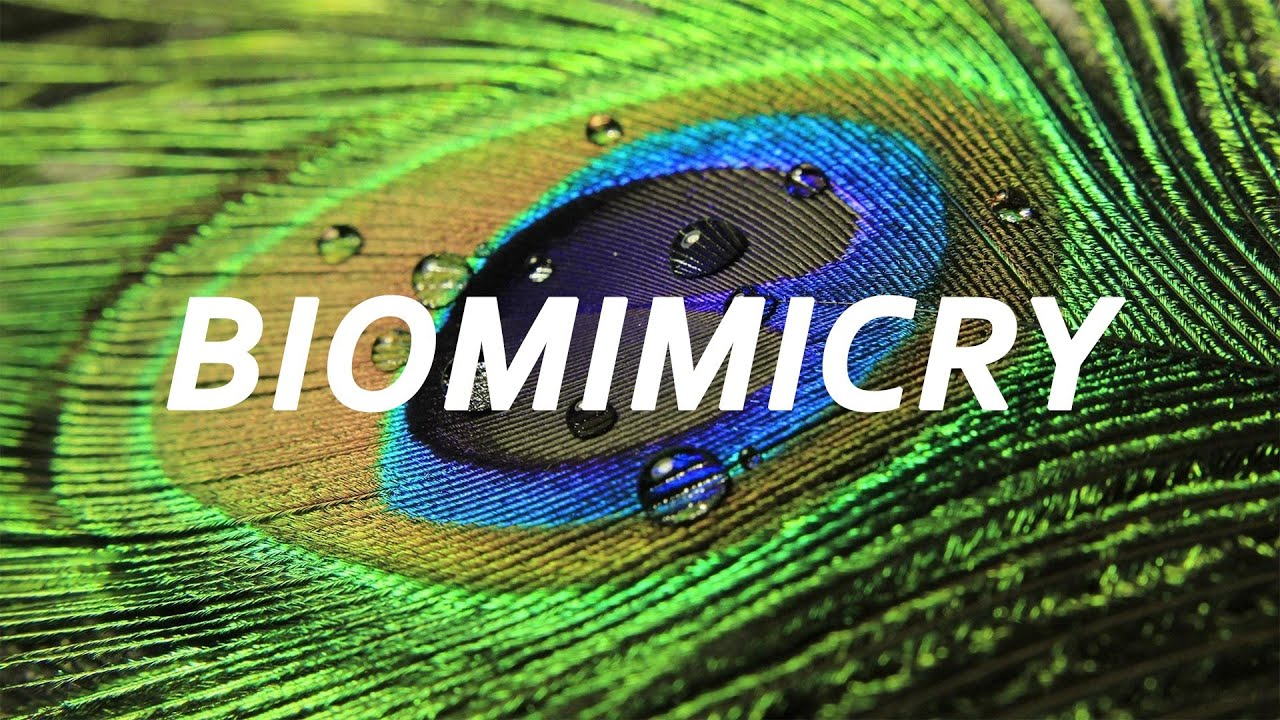 Biomimicry An Introduction With Janine Benyus Youtube