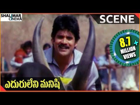 Eduruleni ManishiMovie || Nagarjuna Fight With Bull|| Nagarjuna, Soundarya, Shenaz