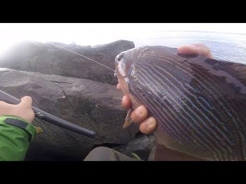 Westport Jetty Fishing - Sea Bass And Sea Perch Www.FishingWa.us