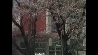 桜まつり (龍ケ崎市愛国学園)2012年4月7日(土)