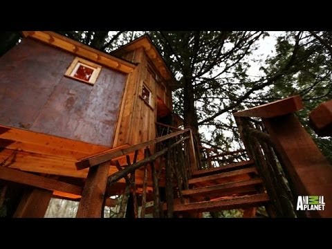 Behind the Build: Record-High Recording Studio | Treehouse Masters<a href='/yt-w/wvCoiyFFtG4/behind-the-build-record-high-recording-studio-treehouse-masters.html' target='_blank' title='Play' onclick='reloadPage();'>   <span class='button' style='color: #fff'> Watch Video</a></span>