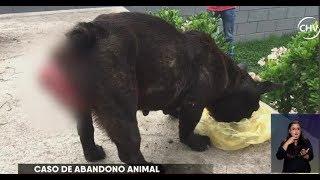 Captaron a sujeto lanzando a una perrita de la raza bulldog francés - CHV NOTICIAS