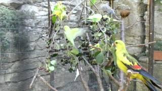 Voliéra s papoušky   a aronie 2