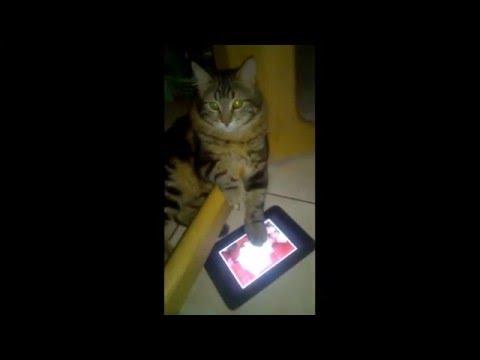 Cat Go Crazy