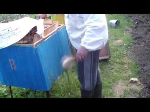 Что делать если укусила оса, шершень или пчела. Первая